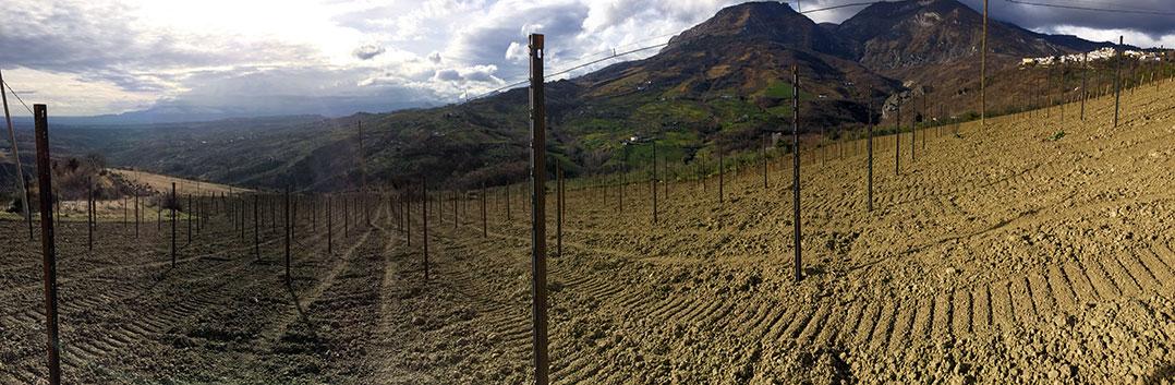vineyard---new---before-planting